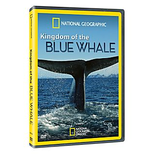 View Kingdom of the Blue Whale - Standard DVD image