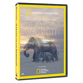 Waking the Baby Mammoth DVD
