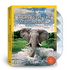 Lion DVD African Wildlife DVDs