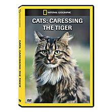 Cats in the Wild DVD