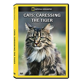 View Cats: Caressing the Tiger DVD Exclusive image