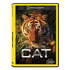 Big Cats DVD