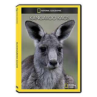Kangaroo Kaos DVD Exclusive