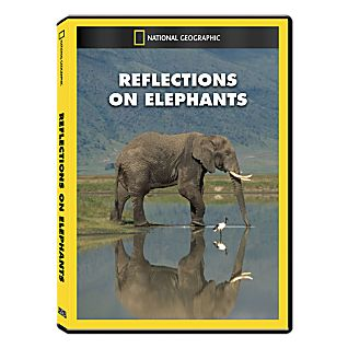 View Reflections on Elephants DVD Exclusive image