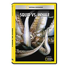 Squid vs. Whale DVD-R