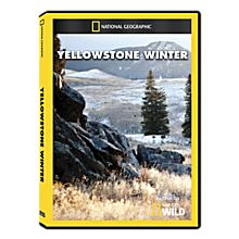 Yellowstone Winter DVD