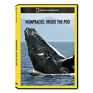 View Humpbacks: Inside the Pod DVD Exclusive image