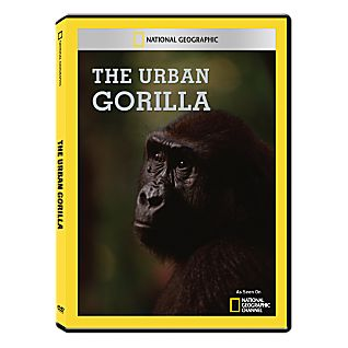 The Urban Gorilla DVD-R