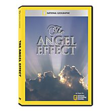 The Angel Effect DVD-R, 2011