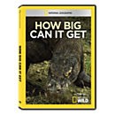 How Big Can It Get DVD-R