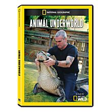 Animal Underworld DVD-R, 2012