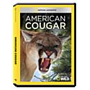American Cougar DVD-R