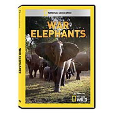 War Elephants DVD-R