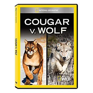 Cougar vs. Wolf DVD-R