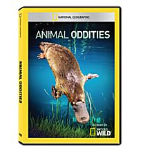 Animal Oddities DVD-R