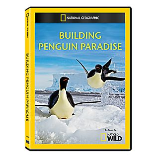 View Building Penguin Paradise DVD-R image