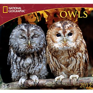 2012 National Geographic Owls Wall Calendar