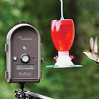 Audubon BirdCam