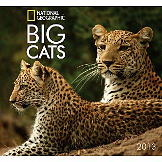 2013 National Geographic Big Cats Wall Calendar