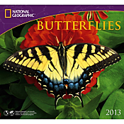 2013 National Geographic Butterflies Wall Calendar