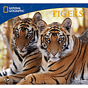 2013 National Geographic Tigers Wall Calendar