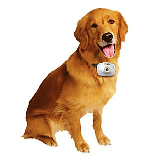 View National Geographic Pet's Eye View Camera image