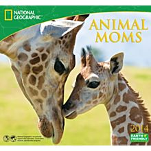 2014Animal Moms Wall Calendar