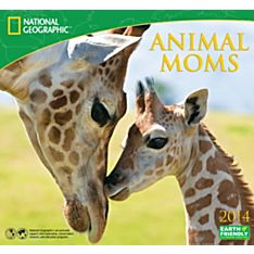 2014 National Geographic Animal Moms Wall Calendar