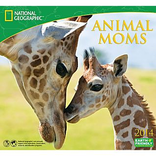 View 2014 National Geographic Animal Moms Wall Calendar image