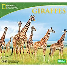 2014 National Geographic Giraffes Wall Calendar