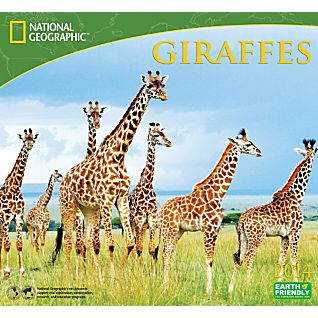 View 2014 National Geographic Giraffes Wall Calendar image
