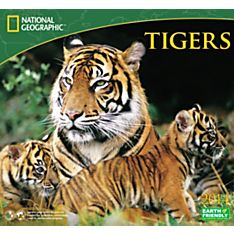 2014 National Geographic Tigers Wall Calendar