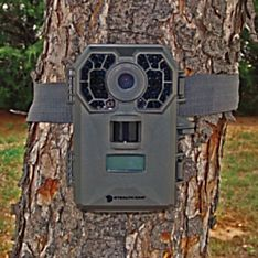 Infrared Video Camera Wildlife