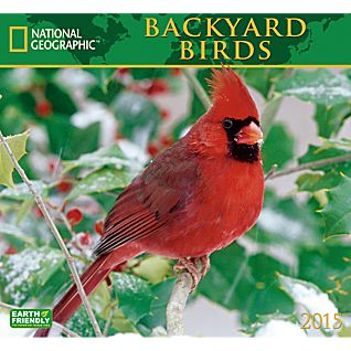View 2015 National Geographic Backyard Birds Wall Calendar image