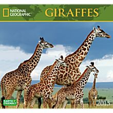 2015 National Geographic Giraffes Wall Calendar