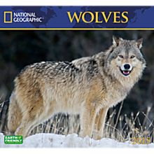 2015 National Geographic Wolves Wall Calendar