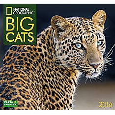 2016Big Cats Wall Calendar - 1554568714