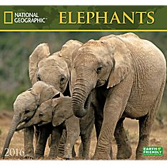 2016Elephants Wall Calendar - 1554568757
