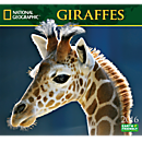 2016 National Geographic Giraffes Wall Calendar
