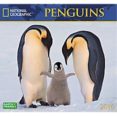 2016 National Geographic Penguins Wall Calendar
