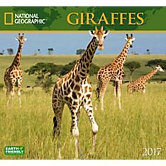 2017 Giraffes National Geographic Wall Calendar