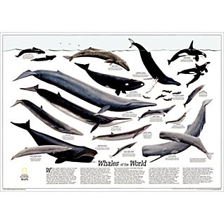 View Whales of the World Map image