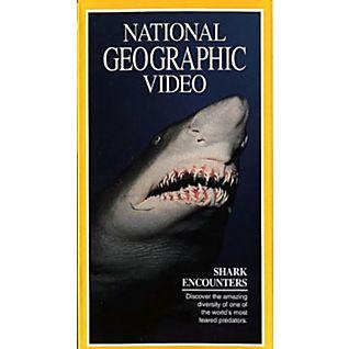 Shark Encounters Video