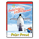 Really Wild Animals: Polar Prowl DVD