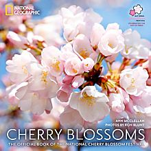 Cherry Blossoms, 2012
