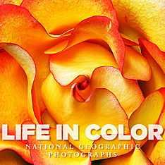 Life in Color Book