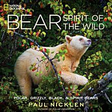 Bear, 2013