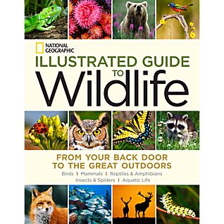 View National Geographic Illustrated Guide To Wildlife image