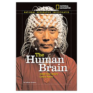 View The Human Brain image