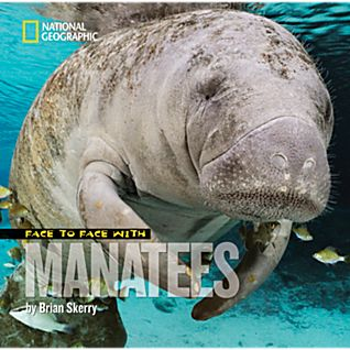 View Face to Face with Manatees image